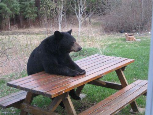 I wanna know where da steak at!  Gimme da steak...